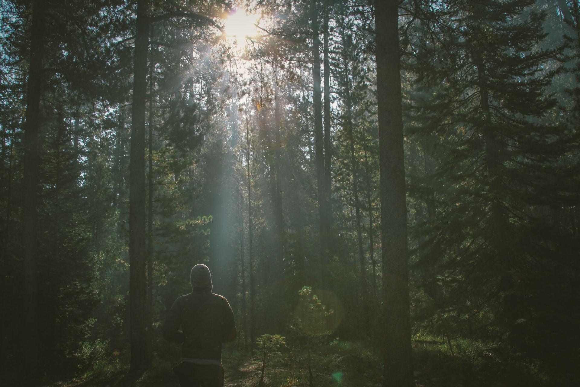 Man in deep dark green forest